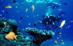 Scuba diving is a popular holiday pastime in Ibiza